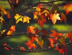 vacanze per celiaci Ponte 1 Novembre