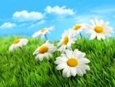 vacanze per celiaci Primavera
